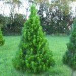 Field Grown